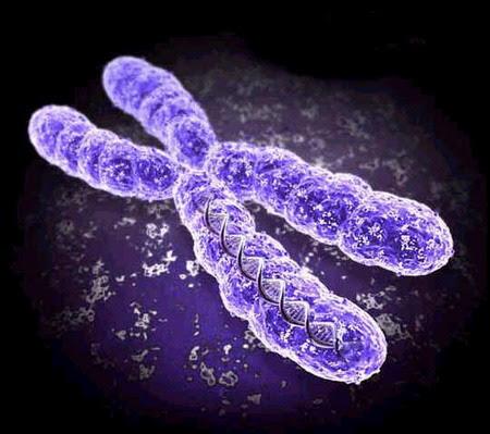 Benh di truyen o nguoi do dot bien gen