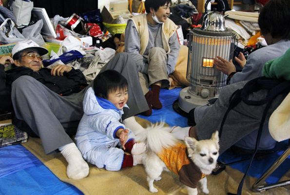Paws for Japan: Hope Amid Destruction