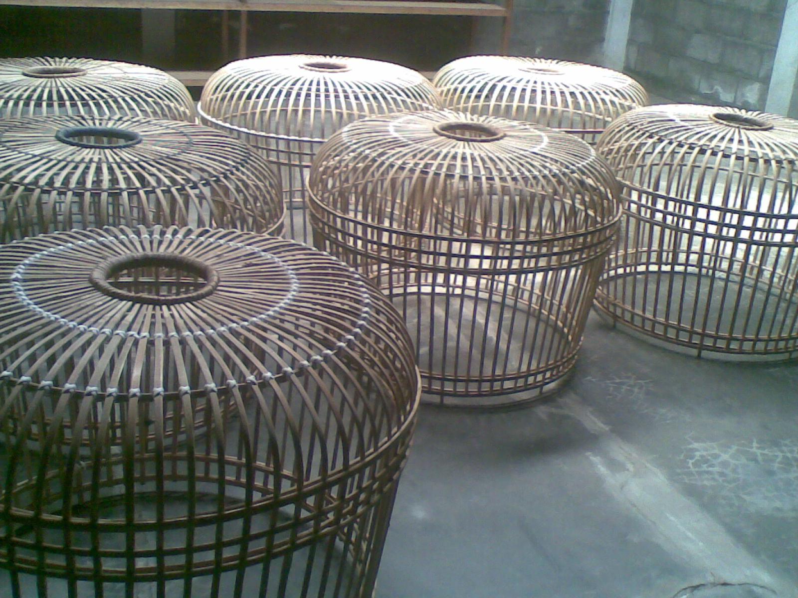 Kandang Mahkota : Sentra Ayam Bangkok Berkualitas, Hub : 081322693111 ...