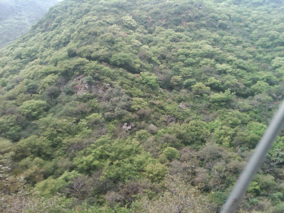 Beautiful view of native shrubs at Margalla Hills National Park