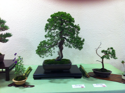 Exposición en Benalmadena IMG_0506