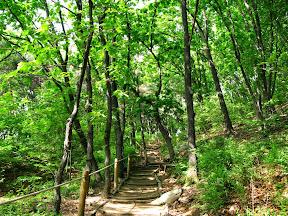 우면산 숲길