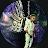 Cloe Bieber avatar image