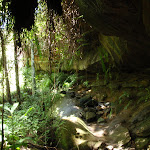 Casuarina track cave (131566)
