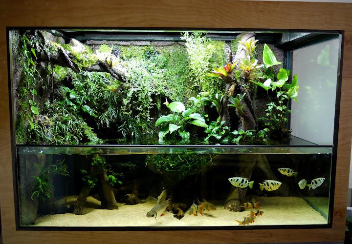 300g paludarium, Chapel Hill NC | MonsterFishKeepers.com 10 Gallon Paludarium
