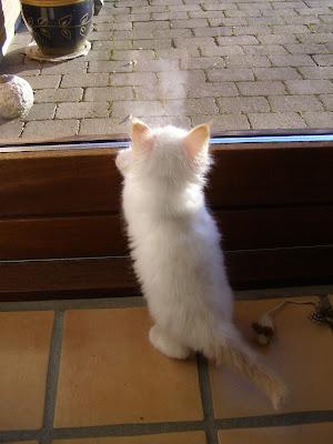 Cosmo fik øje på sit sejbillede i vinduet. Knap 7 uger gl.