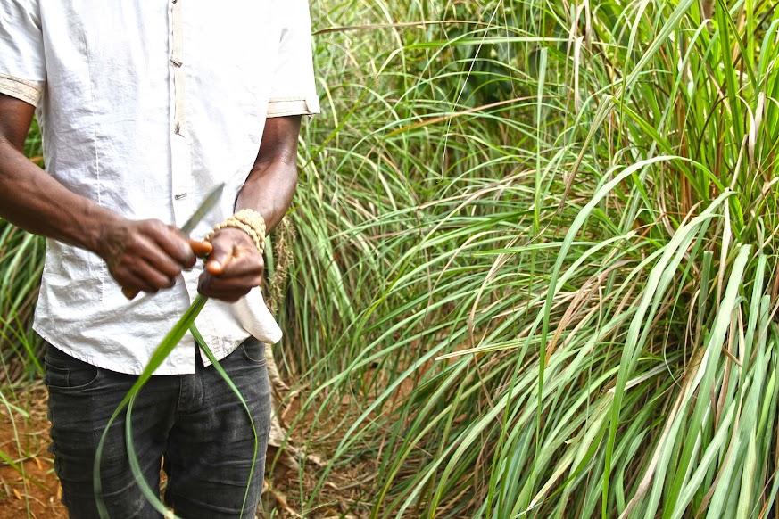 À descoberta das especiarias de Zanzibar (Rota das Especiarias) | Tanzânia