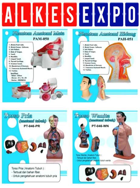 Phantom-Anatomi-Mata-Hidung-dan-Torso-Pria-Wanita-Alkes-Expo