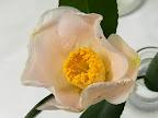 極淡桃色 一重 ラッパ咲き 筒しべ 小〜中輪