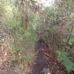 Track above Campfire Creek (145197)
