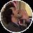 Velija Cohodar avatar image