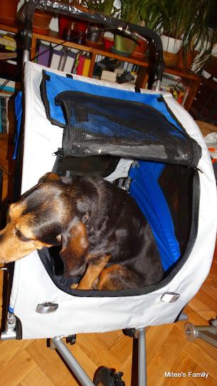 Modes de transport pour petits / vieux chiens qui fatiguent vite - Page 3 DSC02407