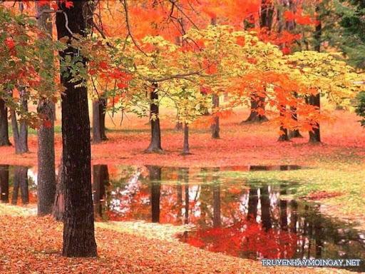 Rừng cây và sắc màu