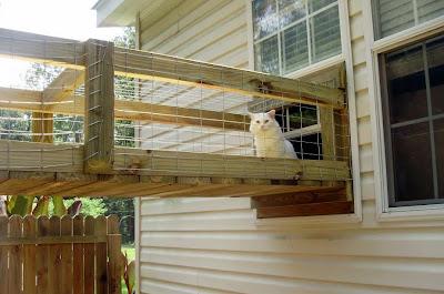 cat walkway to a cat enclosure