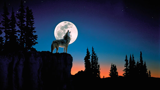 Howl at the Moon.jpg