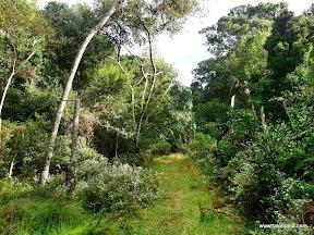 Harkerville Forest