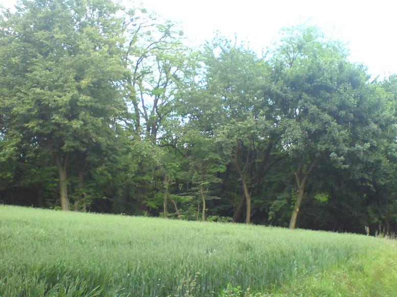 Las w Leśnicy