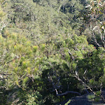 Looking down from Elouera lookout (157519)