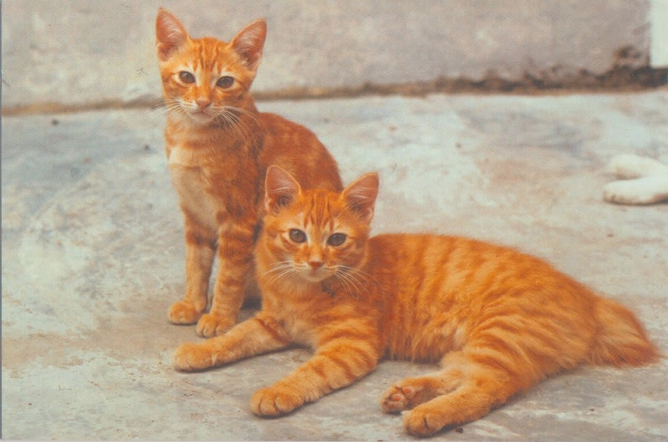 medicine for fleas on cats