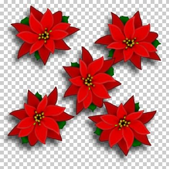 poinsettia_sue.jpg