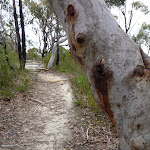 Scribbly Gums east of the F3 (348373)
