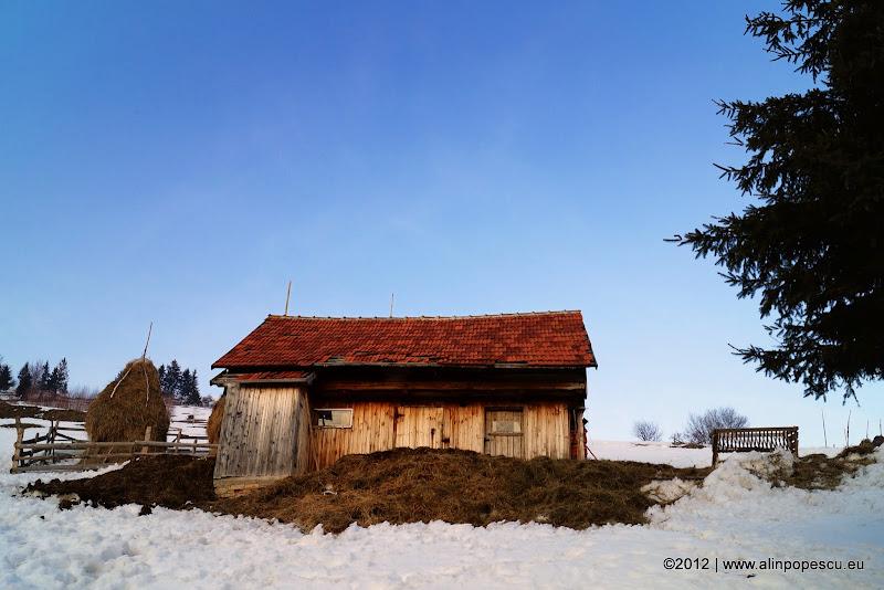 Alin Popescu Photograph
