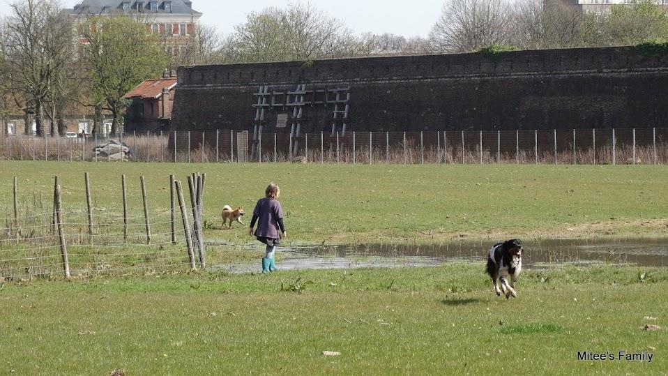 Balades canines en Nord (59)/Pas de Calais (62) - Boulogne-sur-Mer, Calais et Lille - Page 4 DSC01878