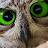 David Radnell avatar image