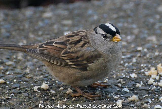 https://lh5.googleusercontent.com/-LtYTCRw111A/Tt-boWZAM_I/AAAAAAAACoU/3l2jnJnlVcw/s640/sparrow%252520bird.jpg