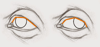 the cornea pushes the lids as it moves