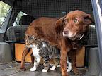 A Inacreditável História Da Amizade Que Une Um Cão Cego E Um Gato-guia Que Está A Emocionar A Internet!