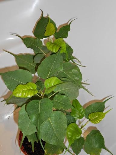 Комнатные растения. Папоротники и т.д. DSCN0069