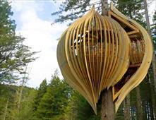 مطعم مصمم فوق شجرة