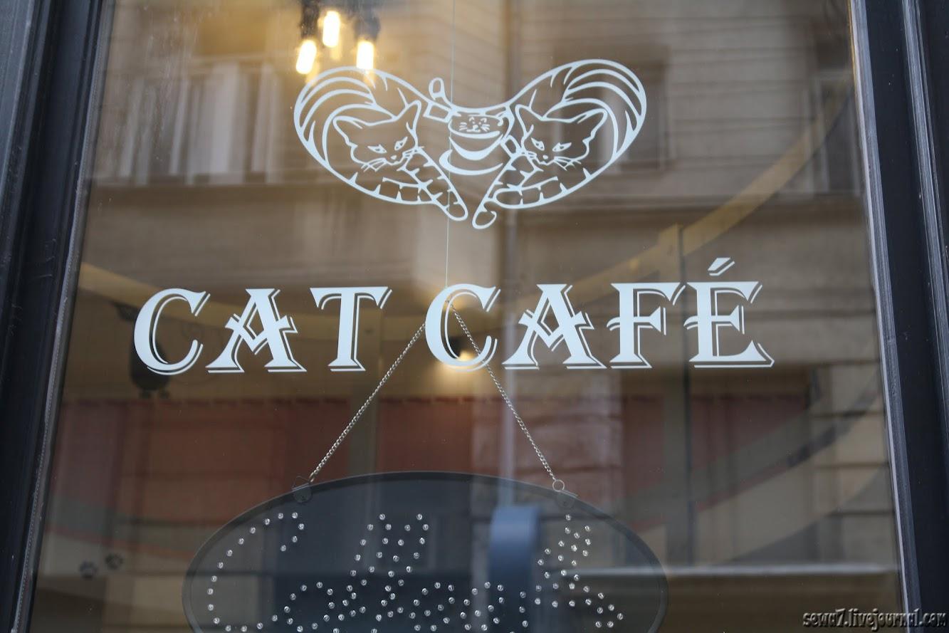 Кошачье кафе Кошачье кафе IMG 4035
