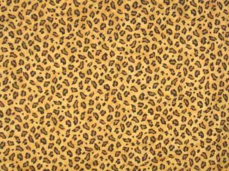 Fondos de pantalla de ... Rainbow Cheetah Wallpaper