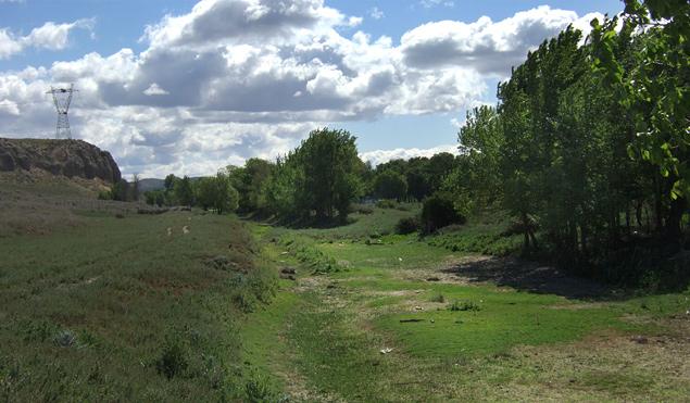 Vaso del Canal del Manzanares con restos de su antiguos árboles