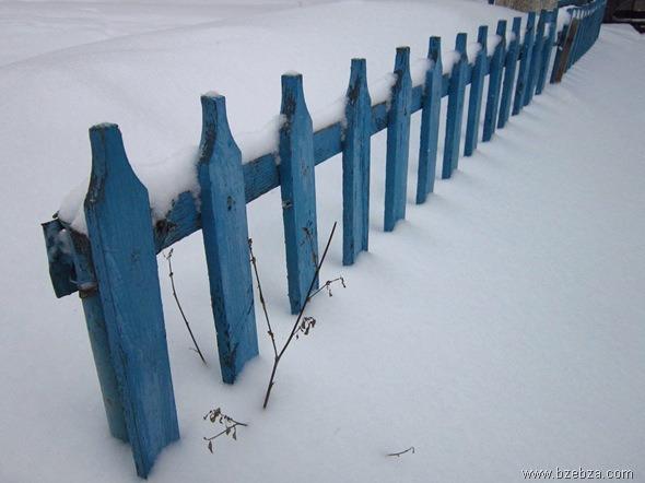 Everyday Photo: Blue Fence