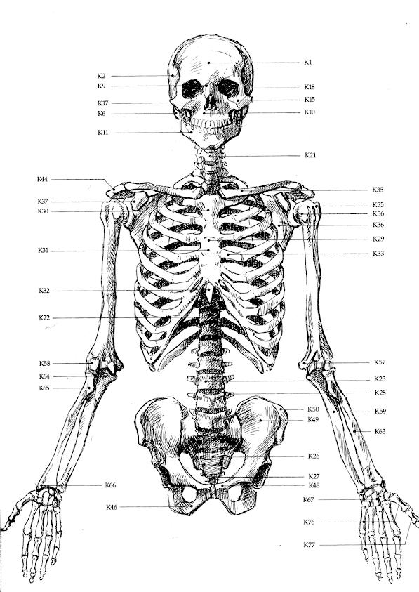 stikninger i hodet navn på muskler i kroppen