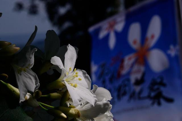 2012雲林古坑桐花祭 桐樂客家–花舞春風囉! (花期4/14 – 4/22)