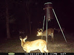 Louisiana Deer Hunts Managed Property Food Plots Lakes Swamps Sloughs