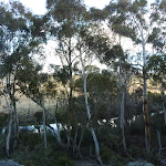Glimpse of the Thredbo River (302782)