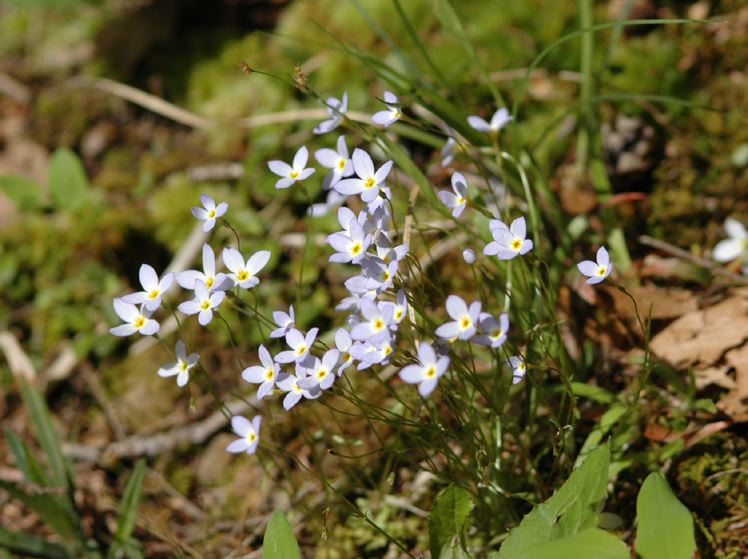Field biology in southeastern ohio early spring wildflowers mightylinksfo Image collections