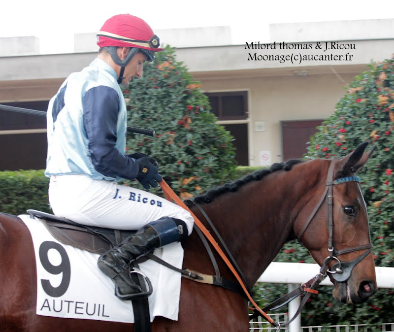 Photos Auteuil 2-11-2014 (48h de l'obstacle) IMG_5609