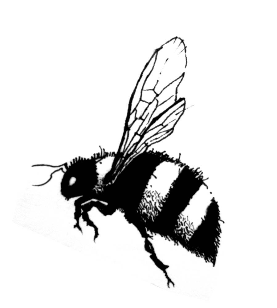 DRAWINGS DAILY: Jess' Bee tattoo