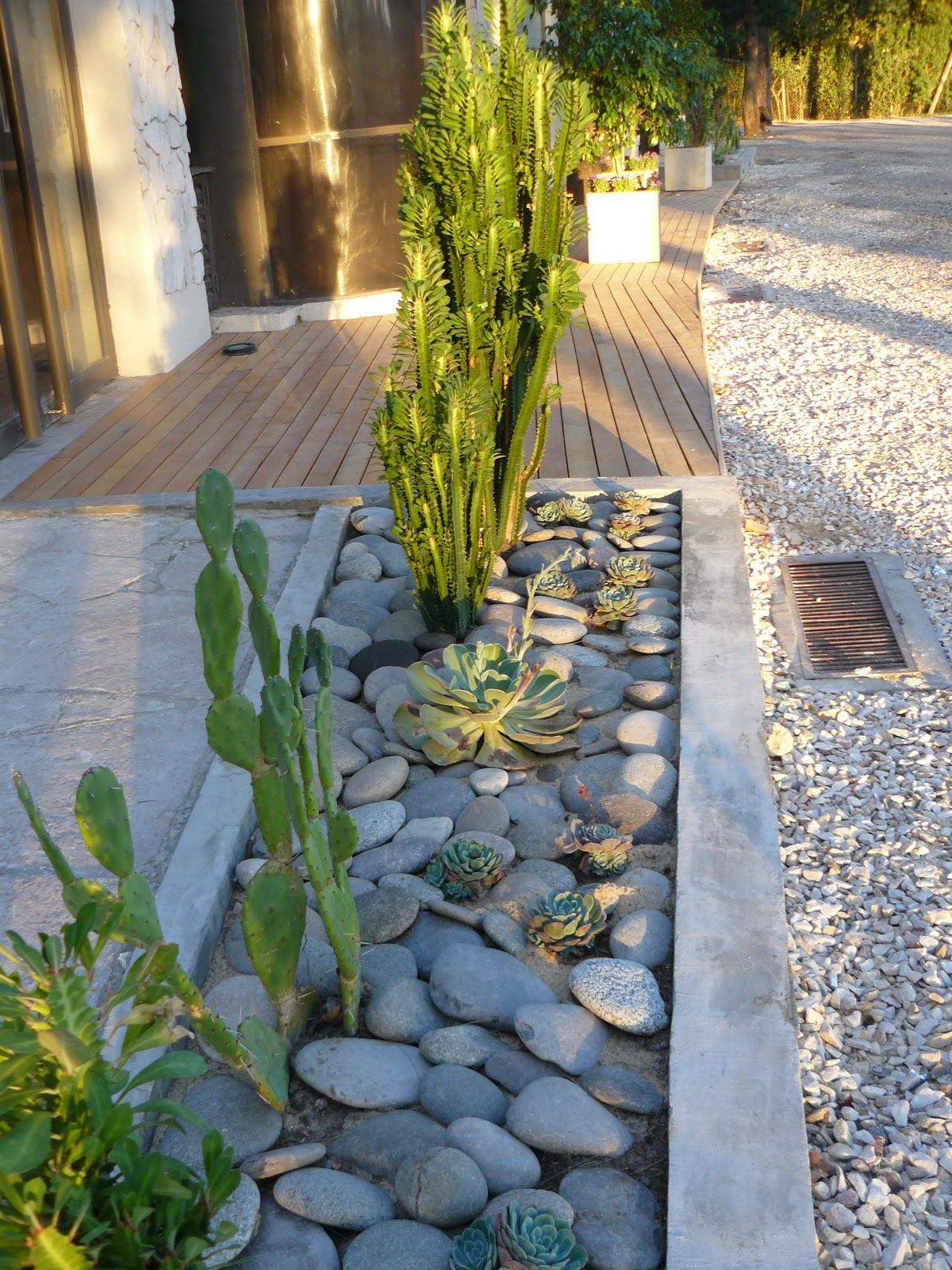 Jardines de cactus y suculentas jard n de cactus y suculentas for Jardines con cactus