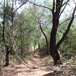 Track through bush (134965)