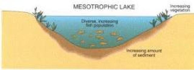 freshwater ecology oligotrophic mesotrophic eutrophic