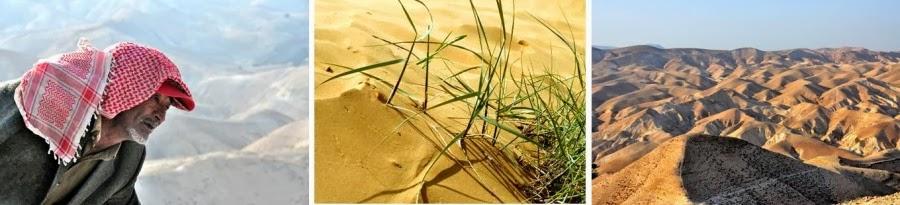 Иудейская пустыня. Гид в Израиле Светлана Фиалкова.