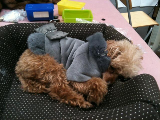 Emilie dog in Fur