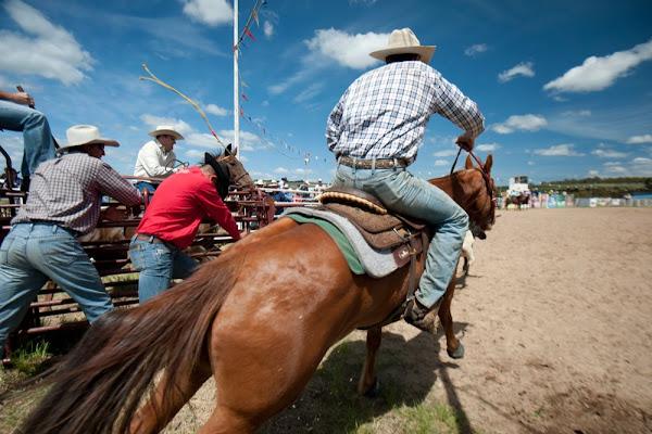 bungendore rodeo